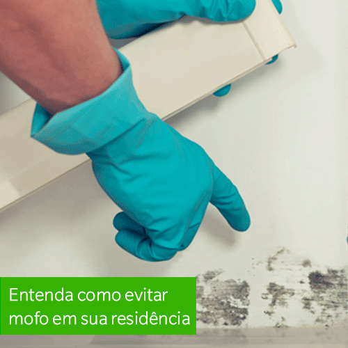 Entenda como evitar mofo em sua residência